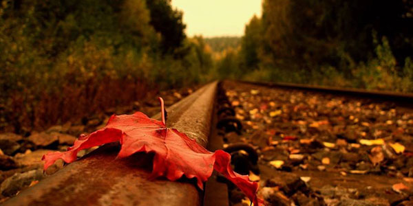 Autumn leaves on track